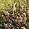 Healthy Grasslands