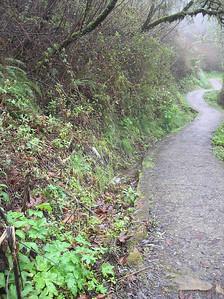 Harkins Cutover Purisima Creek Redwoods OSP by G. Kern
