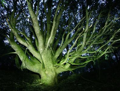 Illuminated Oak Skyline Ridge OSP by S. Hooper