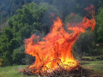 Monster  Cathedral Oaks SA19 Broom pile burn 4/23/2009 Sierra Azul OSP