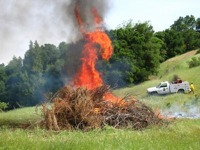 Dragon Cathedral Oaks SA19 Broom pile burn  Sierra Azul OSP  4/23/2009