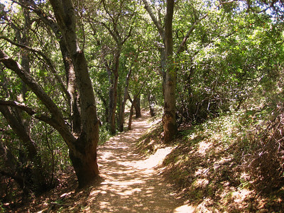 Farm Bypass Trail Rancho San Antonio OSP