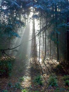 Kate Drayson - Redwood Rays  - La Honda Creek OSP