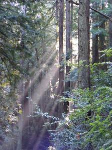 Teresa Gibson - Brushstrokes of Sunshine  - Purisima Creek OSP
