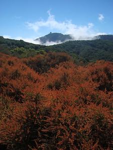 Amanda Mills - Morning fog around Mt. Umunhum  - Sierra Azul OSP, Limekiln Trail