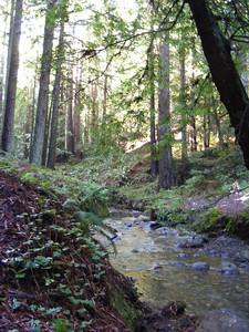 Teresa Gibson - Creekside Serenity  - Purisima Creek Redwoods OSP