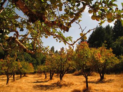 Second Place: Cat Allen - Apple Orchard - Saratoga Gap OSP