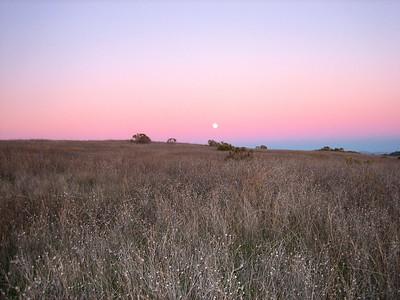 Honorable Mention: Peter Cook - Moon over Russian Ridge - Russian Ridge OSP