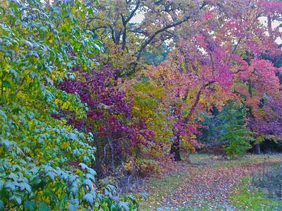 Kate Drayson - Fall Colors - Bear Creek Redwoods OSP