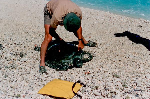 Killed Turtles