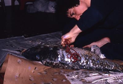 Gefilte Fish Caper -- surgery starts