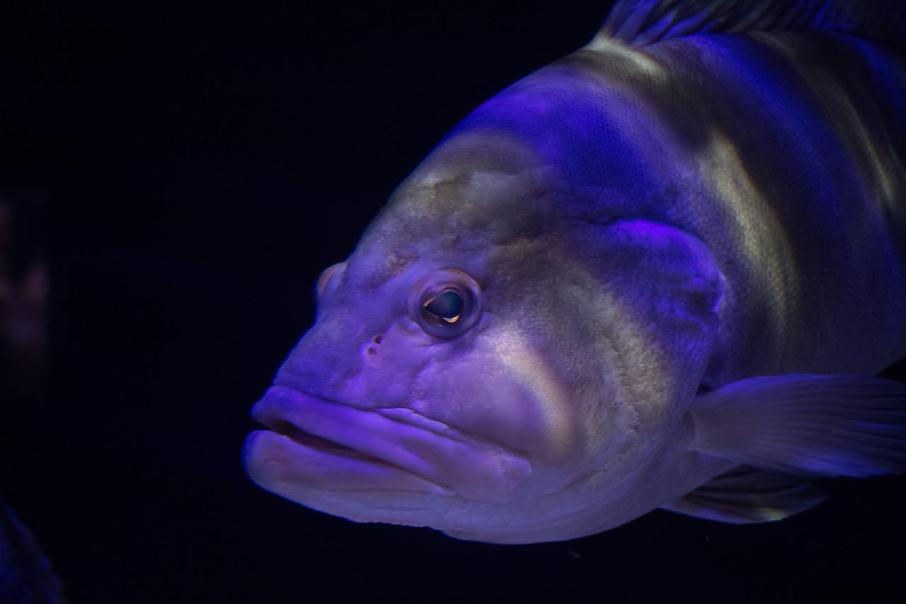 Fish, Mote Aquarium, Sarasota, Florida