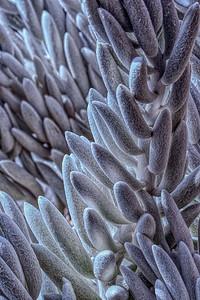Succulent, Cactus Garden