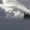 Abert's Squirrel in Winter (Photo #9044)