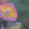 Honeysuckle; (Photo #9689)
