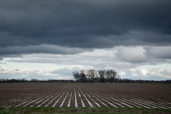 Corduroy Fields