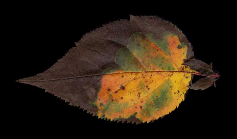 Leaves_20-11-14