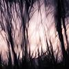 Tree Layers