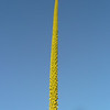 Look at this picture in 'original' size - agave flower stalk -
