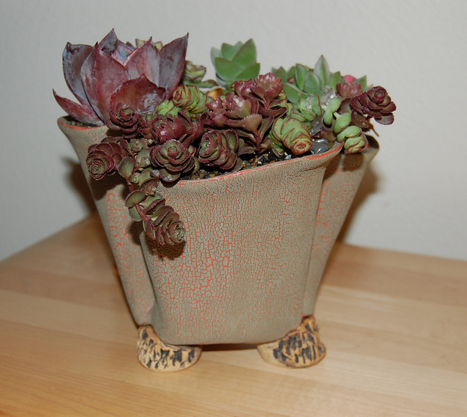 Pocket pot with assorted succulents
