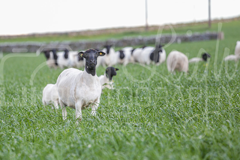 Knotlow Farm-7