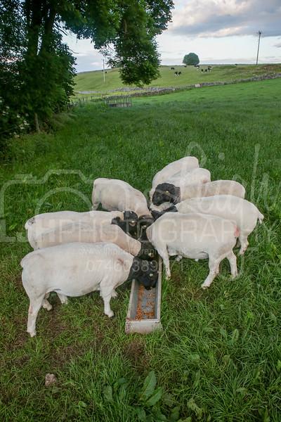 Knotlow Farm-48