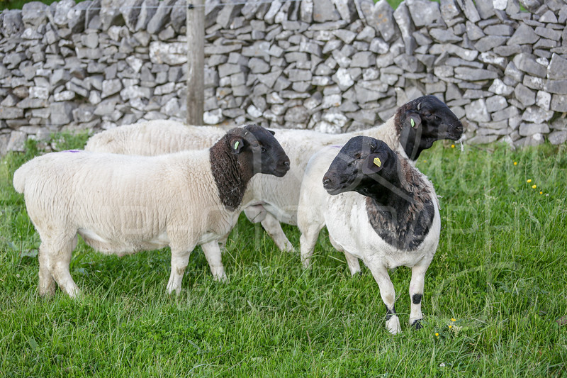Knotlow Farm-29