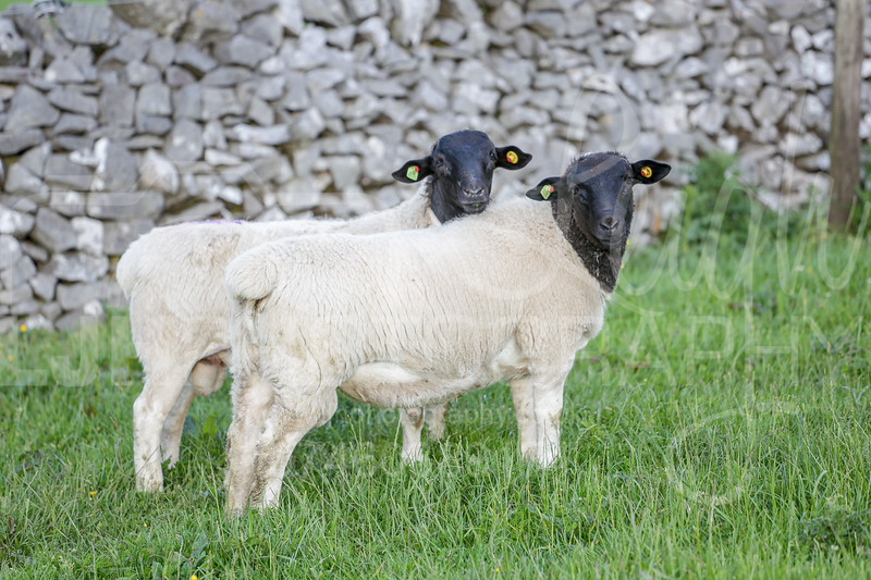 Knotlow Farm-25