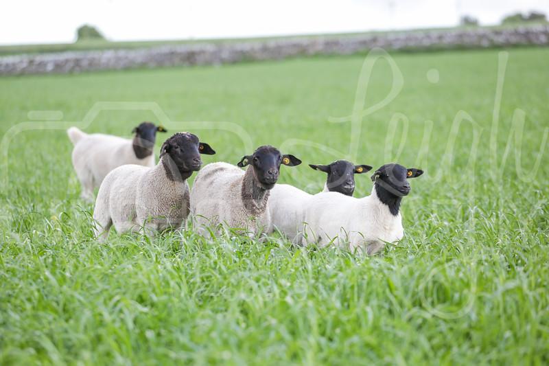Knotlow Farm-9