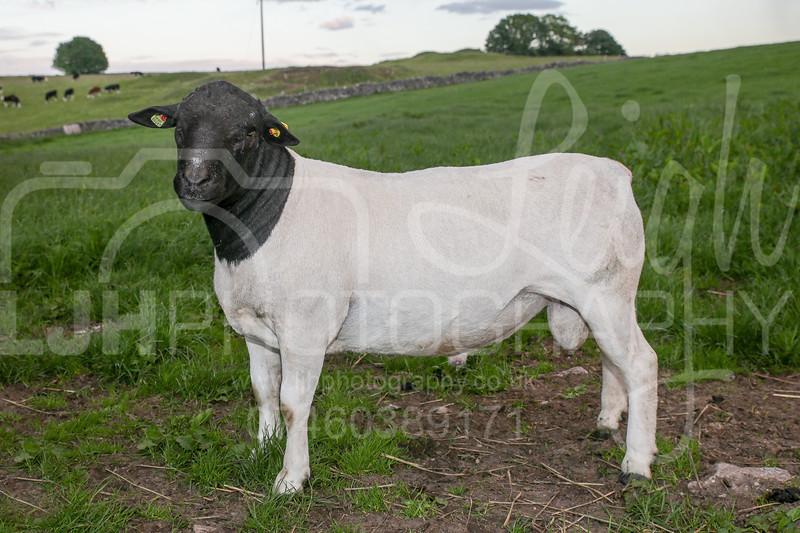 Knotlow Farm-52