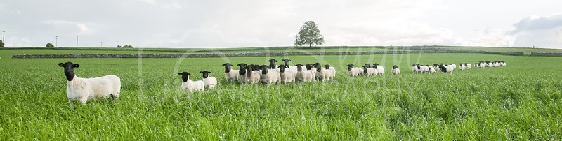 Knotlow Farm-5