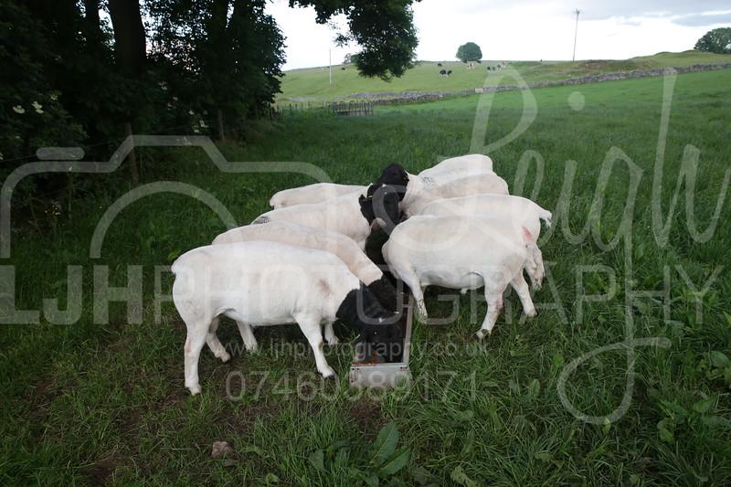 Knotlow Farm-49