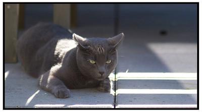 Kattene 2005