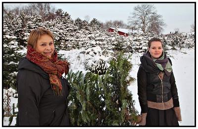 Juletræet hentes 2009
