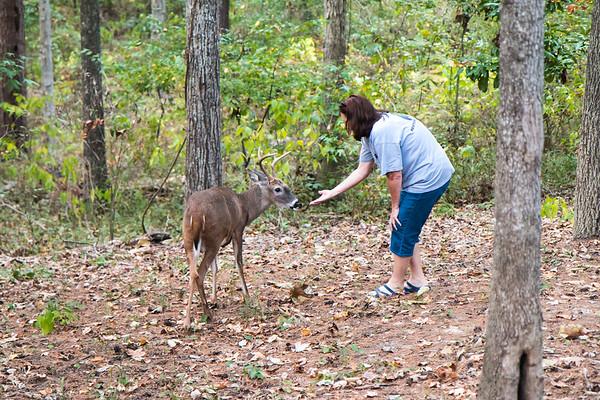 Deer pet Forest 10-15