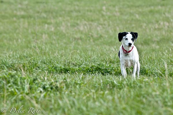 dog_park-66