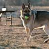 dog_park-26