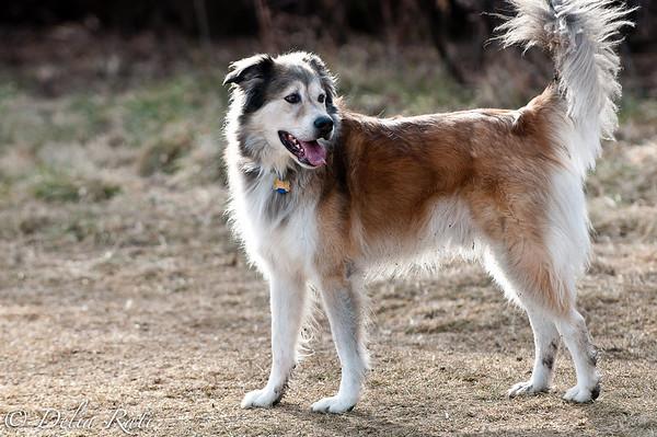 dog_park-31
