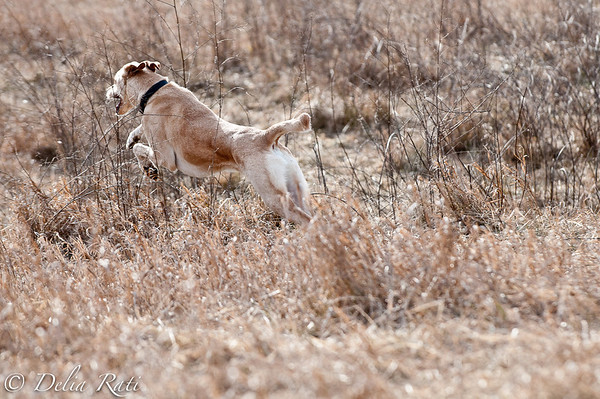 dog_park-37