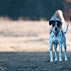 dog_park-12