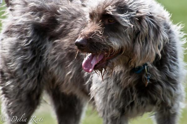 dog_park-73