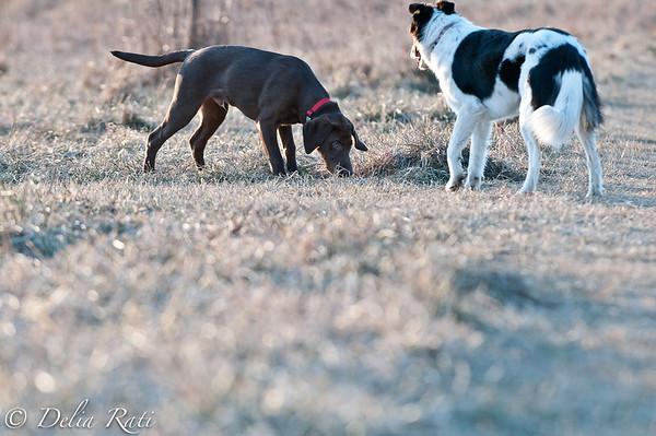 dog_park-18