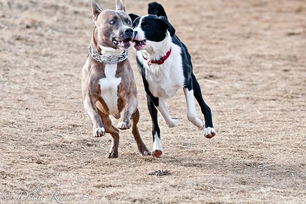 dog_park-44