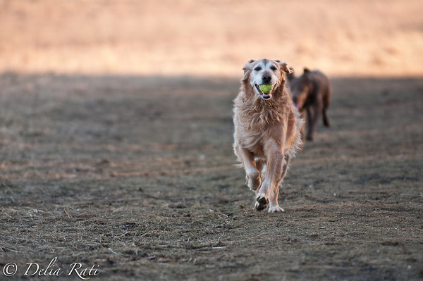 dog_park-9