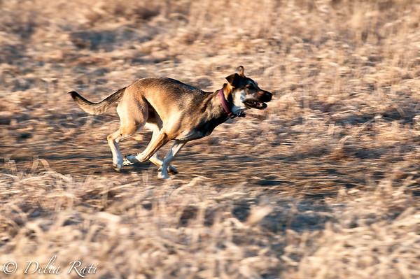 dog_park-20