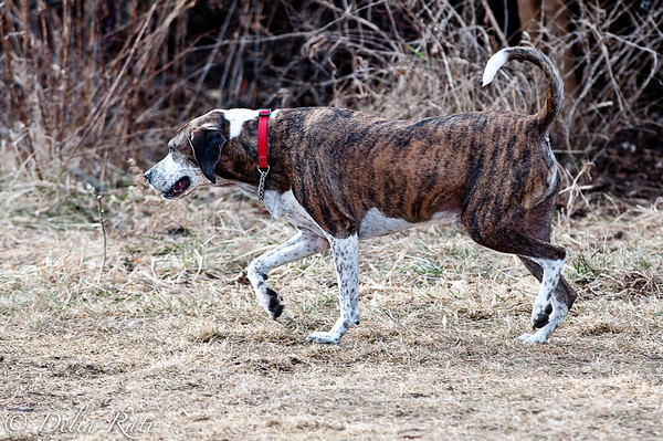 dog_park-33