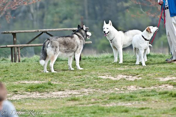 dog_park-98