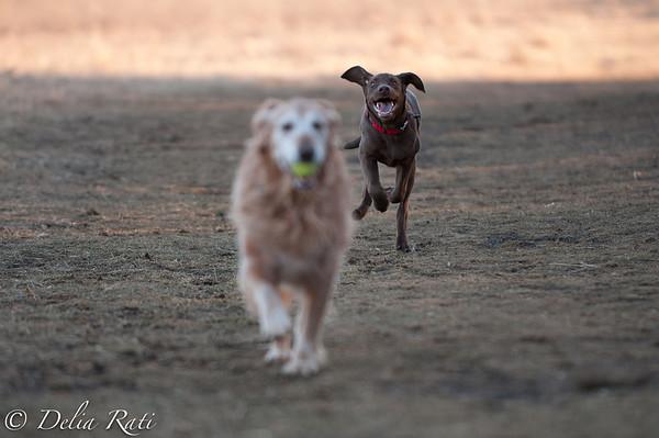 dog_park-10