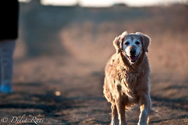 dog_park-3