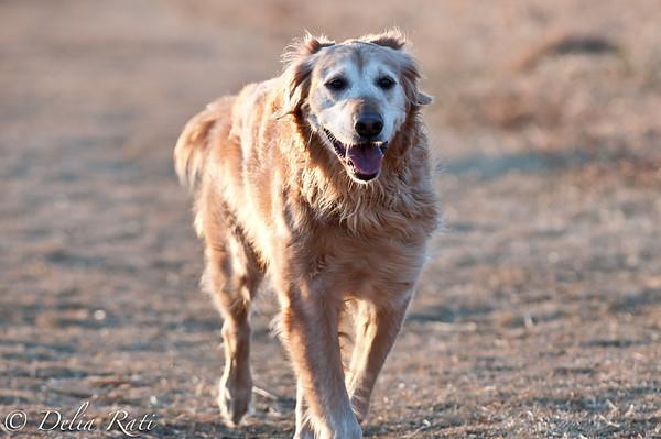 dog_park-19